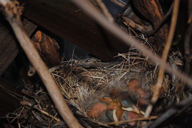 Baby birds 5